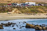 Northern Elephant Seals viewing area, Piedras Blancas Elephant Seal Rookery, San Simeon, California USA