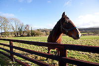 Horse behind fence looking at camera