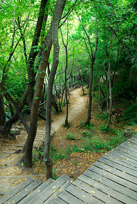 Path through forest, Krka National Park, Croatia
