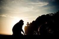 Two monkeys sit on a ledge near Uluwatu Temple, Bali, Indonesia.
