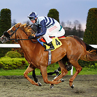 Theturnofthesun and Robert Havlin winning the 7.00 race