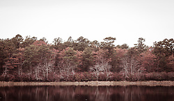 forest and pond on Long Island