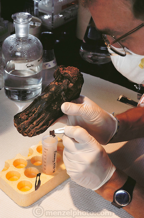 (1992) Mummy's DNA testing. Dr. Svante Paabo taking a sample from a 2000 year old mummy's foot for DNA analysis. DNA obtained from the foot was compared with DNA from present day Egyptians and people from surrounding countries. This is part of research into the amount of ethnic mixing within the population of the upper Nile region. The mummy is about 2000 years old. University of California at Berkeley.  DNA (deoxyribonucleic acid) is the molecule responsible for carrying the genetic code, which is slightly different in every individual. Familial traits can be traced by studying the differences. Taking DNA from preserved humans gives a good account of how humans spread across the world. ). MODEL RELEASED