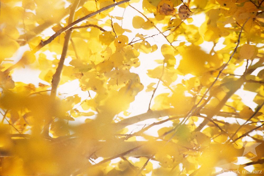 Park City, Utah USA area fall scenics