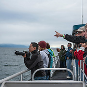 Passengers from cruise ships go whale watching near Auke Bay, Alaska.<br /> Photography by Jose More