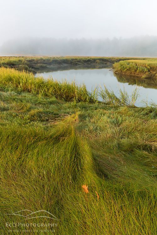 A salt marsh along the York River at the Smelt Brook Preserve in York, Maine.