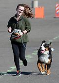 Doggie Dash & Dawdle