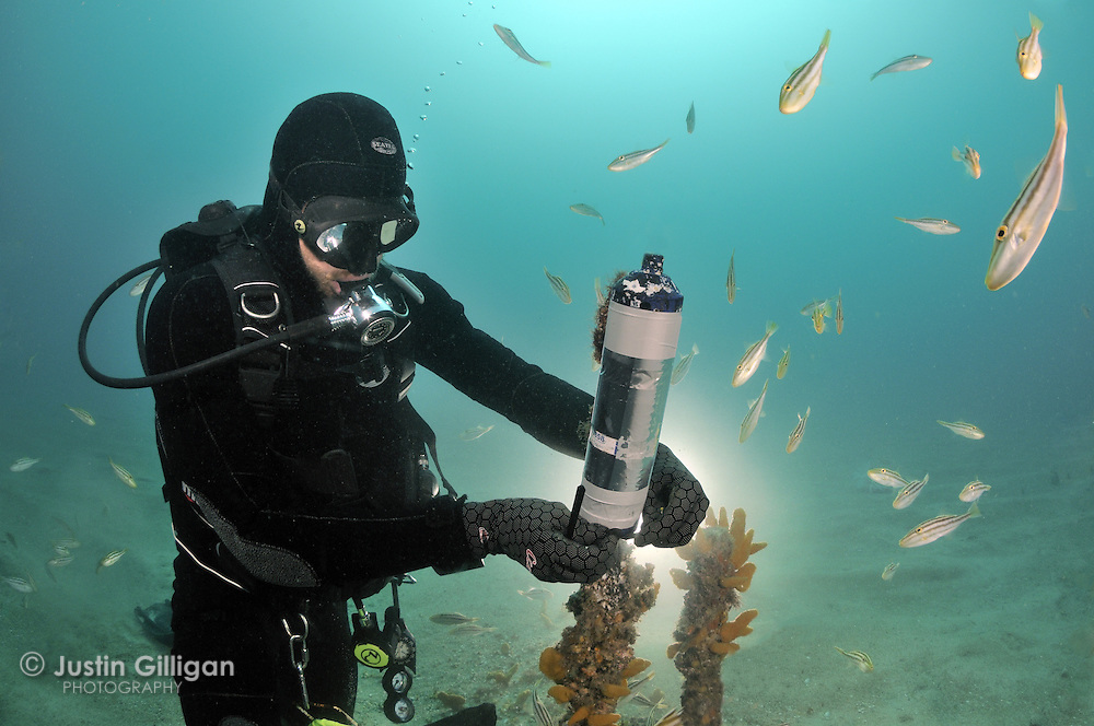 Acoustic listening stations are used in shark movement studies, they store data when a tagged shark swims within 500m of the station, which are strategically positioned throughout the shark's distribution, photographed off New South Wales, Australia, Pacific Ocean.