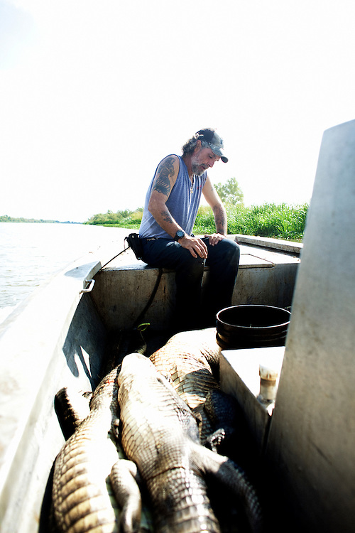 Rebel rests on the bow of the boat after landing another alligator during a busy day of gator hunting near Shell Island, Louisiana on Saturday, September 19, 2009.