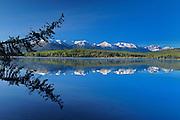 Tree snag reflected in Pyramid Lake<br /> Jasper National Park<br /> Alberta<br /> Canada
