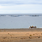 Horses are on the playa del Pozo, a beach near Playa Quemada (Lanzarote) with fish farms in the background.