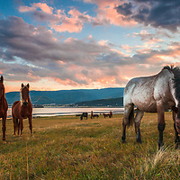 Funny horses grazing by the lake at the sunset