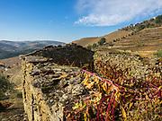 Awaiting restoration - vineyards first!