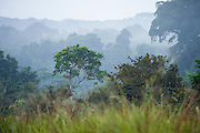 Morning mist<br /> Rain forest understory<br /> Odzala - Kokoua National Park<br /> Republic of Congo (Congo - Brazzaville)<br /> AFRICA
