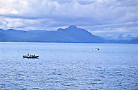 A small skiff carries a group of nature photographers into Fredrick Sound to photograph and observe Humpback Whales.  Southeast Alaska.