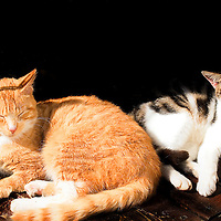 2 beautiful cats rest in the sunshine