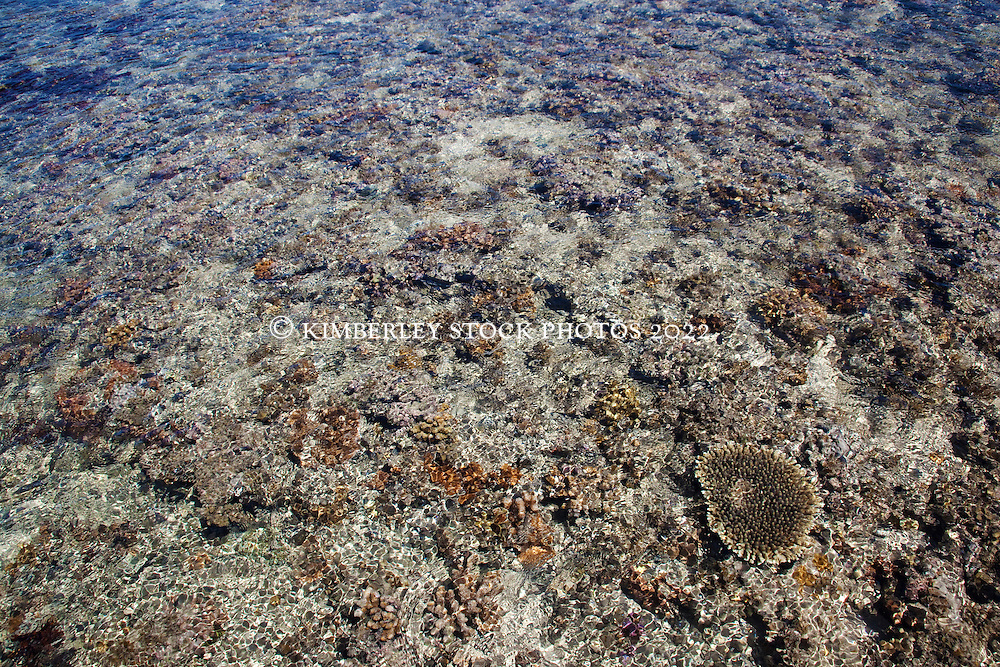 Corals and other marine life growing on top of Montgomery Reef.  Water cascades down a small channel on Montgomery Reef. On a falling tide the reef appears to rise from the ocean as water flows off the reef.  At 292km2, Montgomery is Australia's largest inshore reef.