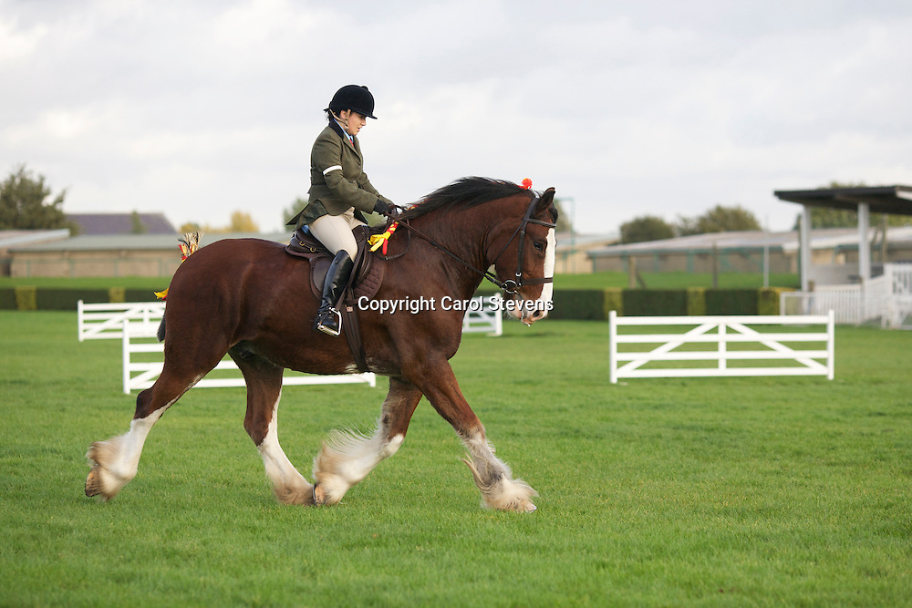 Ami Williamson riding Mr J R Richardson's 4 year old bay gelding Shire Horse, Tochill Joseph Jebb<br />