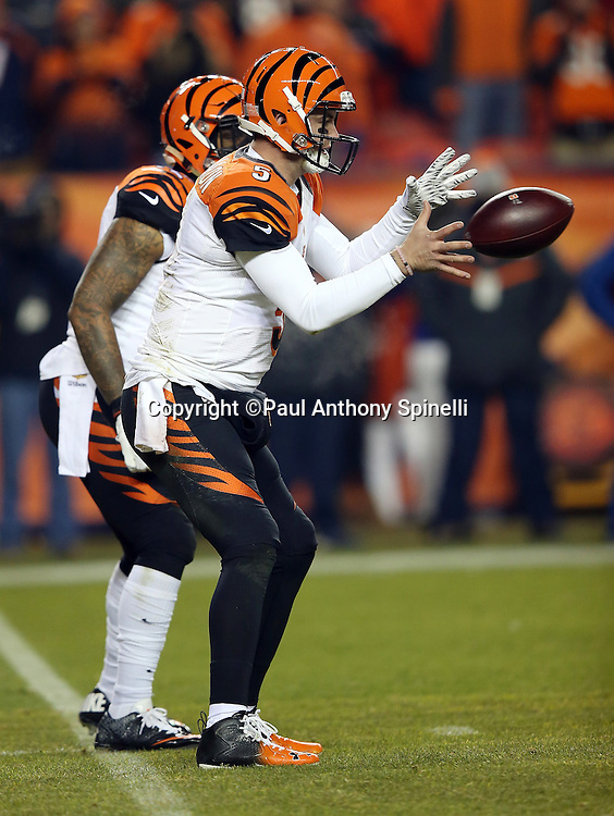 Cincinnati Bengals quarterback AJ McCarron (5) catches a shotgun snap during the 2015 NFL week 16 regular season football game against the Denver Broncos on Monday, Dec. 28, 2015 in Denver. The Broncos won the game in overtime 20-17. (©Paul Anthony Spinelli)