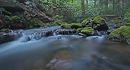 Dusk Galbraith Gap Run Rothrock State Forest