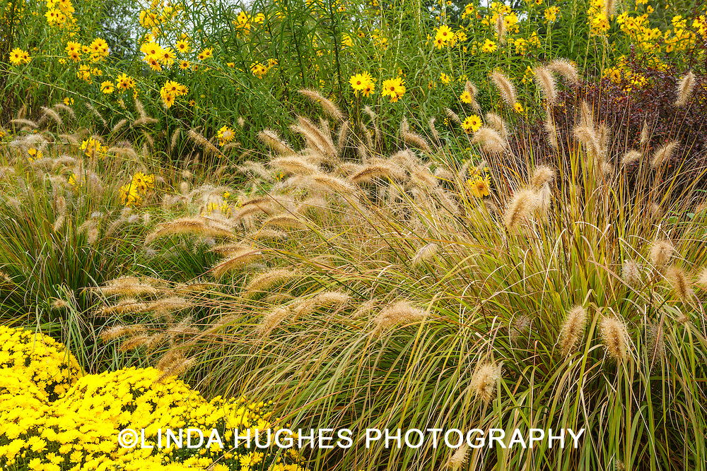 ornamental grasses, mums and sunflowers