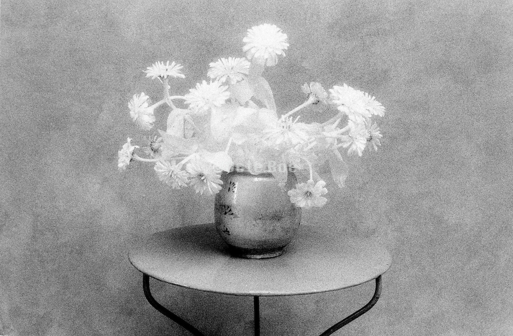 monochromatic still life with flowers