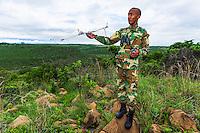 Rhino Monitoring Field Ranger using radio telemetry, Nambiti Private Game Reserve, KwaZulu Natal, South Africa