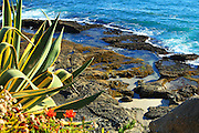 Tide Pools and Coastal Landscape of Laguna Beach California