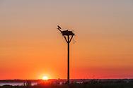 Osprey, Pike's Beach Westhampton Beach, NY