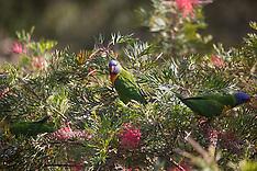 Birds - NSW