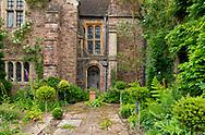 Greenery on the terrce garden in front of Cothay Manor, Greenham, Wellington, Somerset, UK