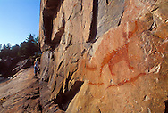 A tourist hikes along Agawa rock after inspecting an ancient Ojibwa pictograph depicting Misshepezhieu, the horned lynx demigod of Lake Superior, in Lake Superior Provincial Park near Wawa, Ontario.