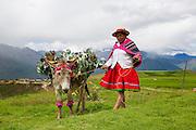 Quacha woman in traditional costume, Inca terraces of Moray,  Cusco Region, Urubamba Province, Machupicchu District, Peru