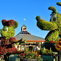 Minnie Mouse and Pluto Topiaries in Showcase Plaza at Epcot in Orlando, Florida<br /> The Minnie Mouse and Pluto topiaries were located in Showcase Plaza, welcoming you to the start of your tour to the country pavilions.  Minnie was fashionably attired in a red dress with matching headband. Walt Disney created her and Mickey in 1928 for Steamboat Willie, a black and white, eight minute film with innovative synchronized sound. Two years later, the cartoon couple got a dog. At first named Rover, he was renamed Pluto in 1931. The famous pet is seen here sporting a collar of bright yellow sunflowers.