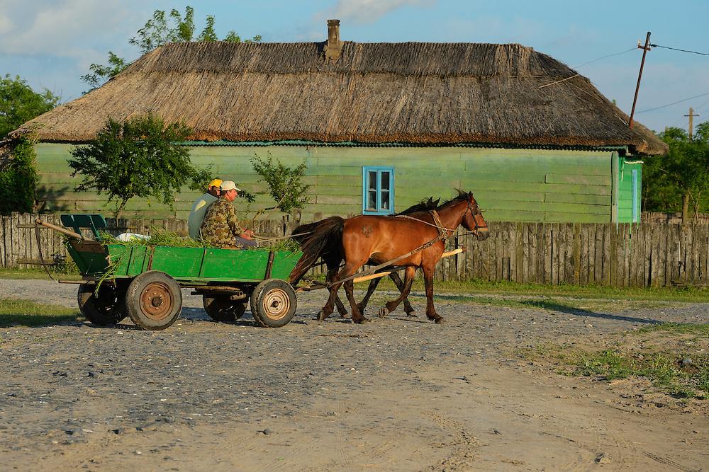 Letea, Danube delta rewilding area, Romania