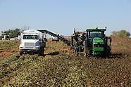 Harvest near Ft. Cobb