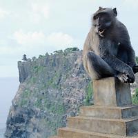 Bali, Pura Ulu Watu, monkey