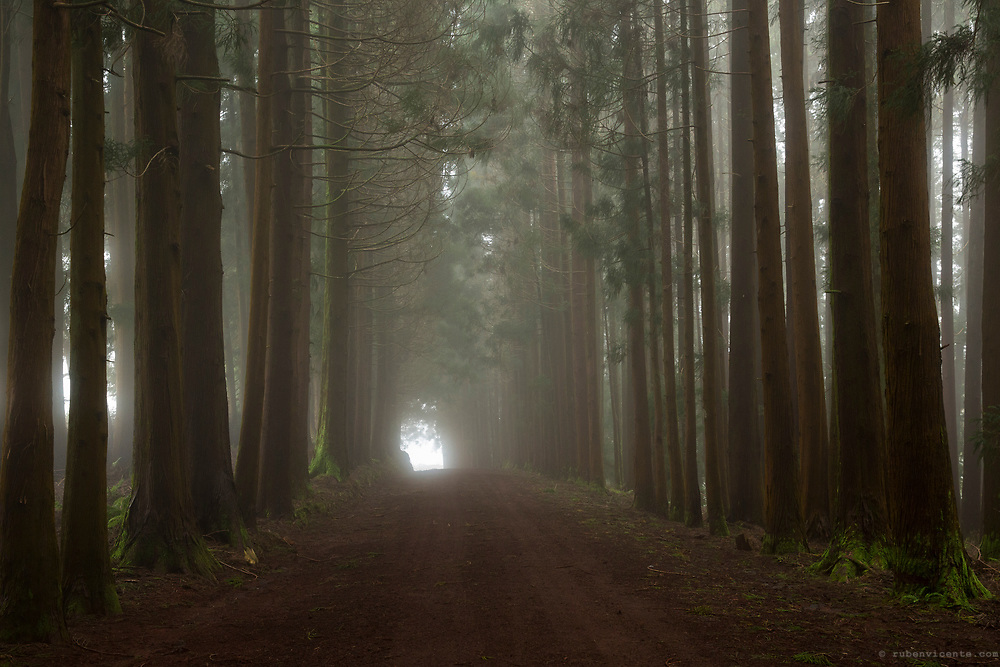 Tree tunnel on a dirt road of Terceira island. Azores, Portugal