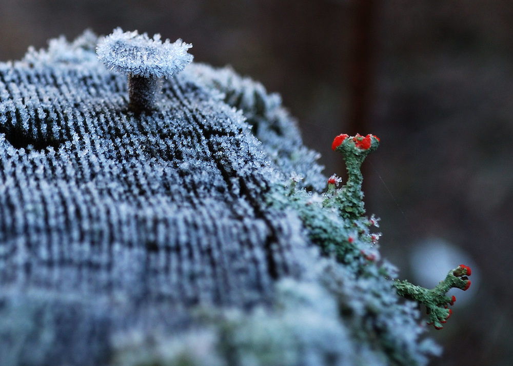 Frosty Fencepost