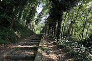 A track in the woods that from Canale Industriale (Industrial Canal) bring up to old Dogana Austriaca (Austrian customs) where there is an office of Parco Lombardo della valle del Ticino (Lombardy Park of Ticino river valley) at Tornavento, Varese, July...Il sentiero nel bosco che dal Canale Industriale sale verso la vecchia Dogana Austriaca, una delle sedi del Parco Lombardo della Valle del Ticino, Tornavento, Varese, luglio.