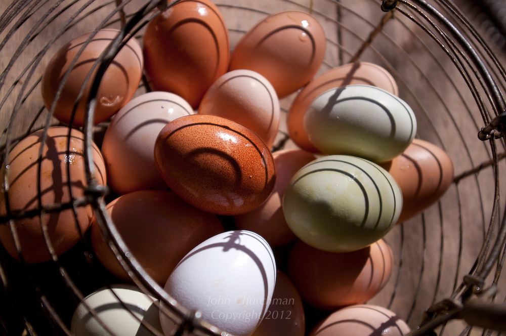 Organic heritage eggs in old fashioned egg basket