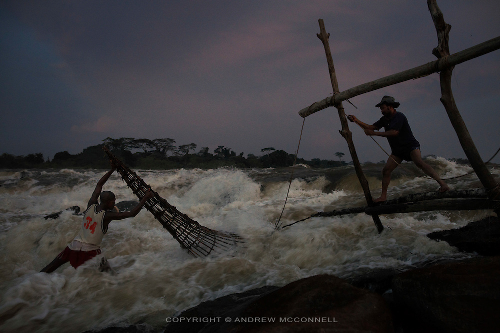 Fishermen check a basket at dusk in the middle of the Congo River at Wagenia Falls, near Kisangani, DR Congo. The explorer H.M. Stanley in 1877 described this last cataract, of the then Stanley Falls, as a 'tumultuous rush'. The fishing here is some of the most difficult as fishermen must battle the full force of the flow, and it is here that the Lualaba River becomes the Congo River.