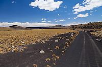 CAMINO NEGRO DE PIEDRAS VOLCANICAS ENTRE LA ESTEPA CON COIRONES (Festuca gracillima - fam. poaceas) Y CONOS VOLCANICOS, RESERVA PROVINCIAL LA PAYUNIA (PAYUN, PAYEN), MALARGUE, PROVINCIA DE MENDOZA, ARGENTINA (PHOTO © MARCO GUOLI - ALL RIGHTS RESERVED)