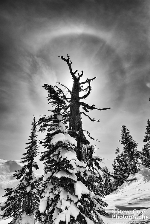 Tree Creature - Mount Baker Ski Area