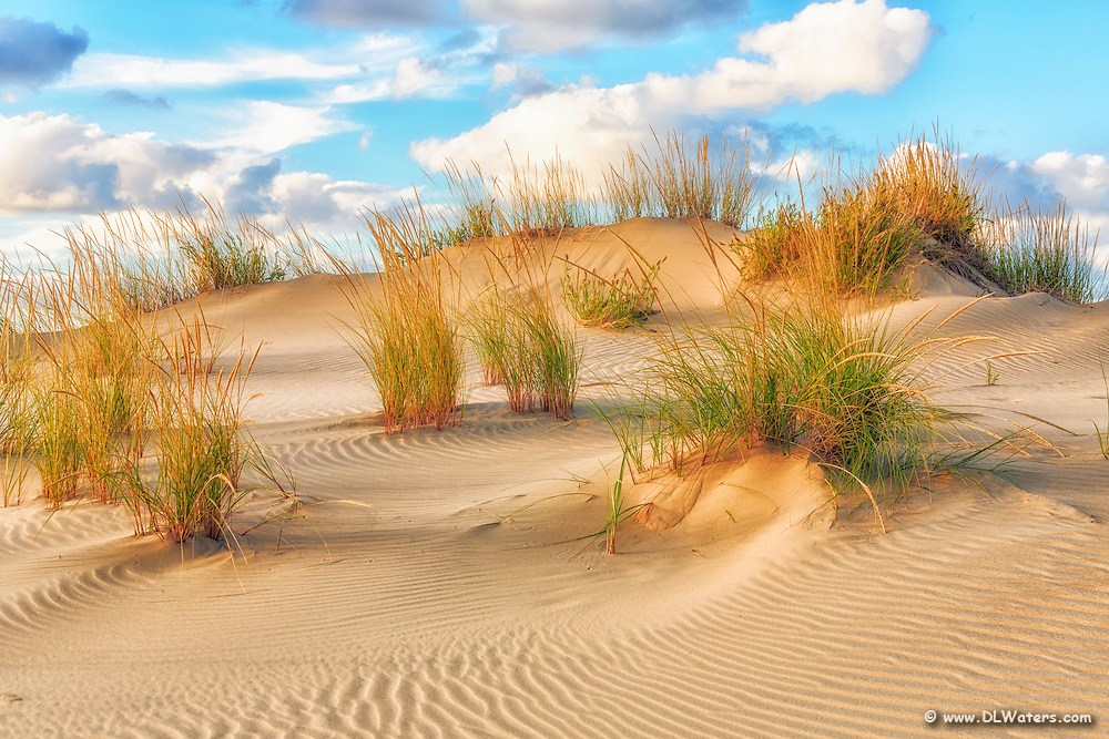 Sand dune at Jockeys Ridge State Park on the Outer Banks.