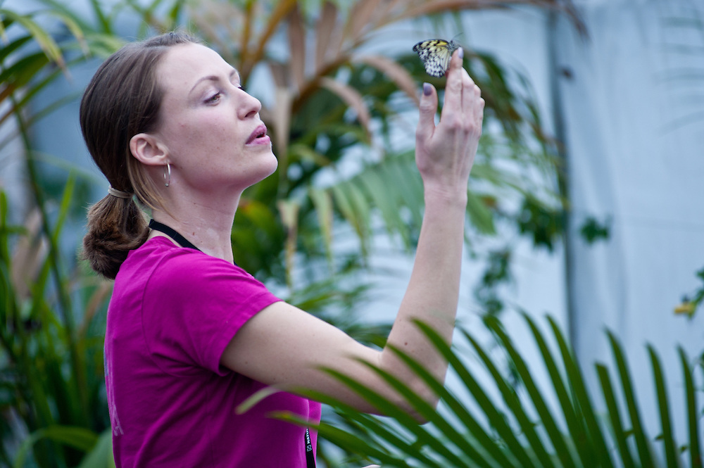 London, UK - 25 March 2013: A woman comes face to face with species from all over the globe including the spectacular swallowtail, the beautiful blue morpho, the magnificent moon moth and many more, originating from Africa, Southeast Asia and North and South America.