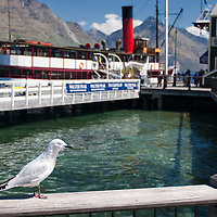 A seagull and the TSS Earnslaw steamship in the harbour of Queenstown.