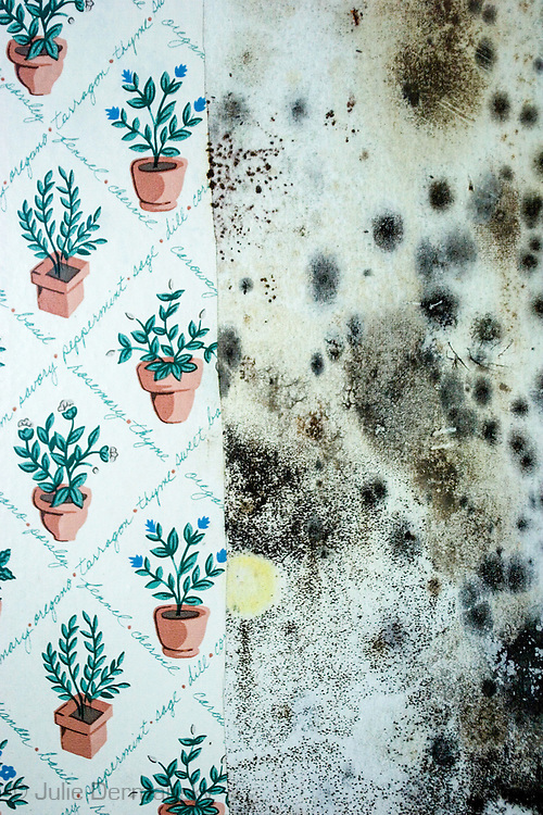 1/18/2007 Moldy wallpaper in a home destroyed by Hurricane Katrina in New Orleans.