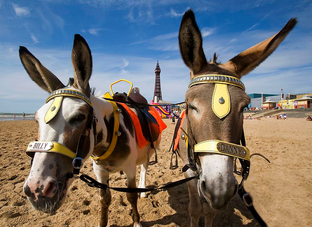 Blackpool Donkeys