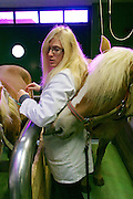 Vienna, Austria. Veterinärmedizinische Universität Wien (Vetmeduni Vienna).<br /> Haflingers at the Department/Clinic for Companion Animals and Horses (Department/Universitätsklinik für Nutztiere und öffentliches Gesundheitswesen in der Veterinärmedizin).